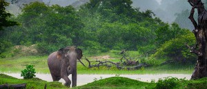 Bild - im Tiefland von Sri Lanka