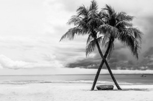 Bild Nutzen der Kokospalme