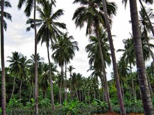 ökologischer Anbau in Mischkulturen
